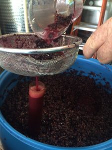 home-winemaking, grapes